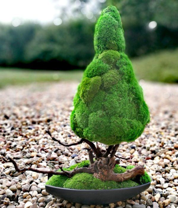 Drzewko z mchu stabilizowanego