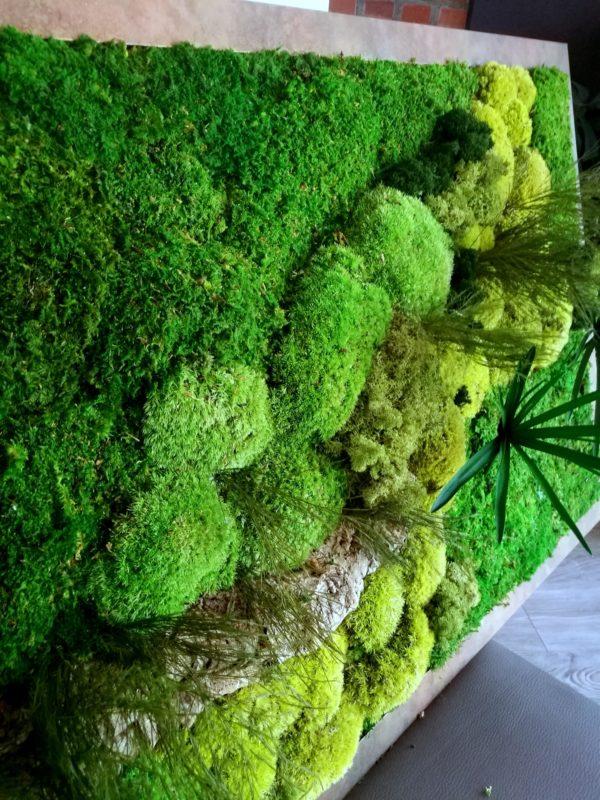 Obraz z mchu Green Hype
