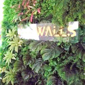 Ściana kwiatowaMonstera i Sukulenty