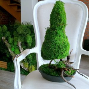 Drzewko bosai z mchu stabilizowanego